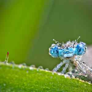 Obrázek 'Dragonflyafterrain'