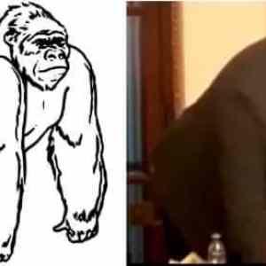 Obrázek 'Gorilisamecvriji'