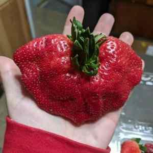 Obrázek 'STRONKberry'