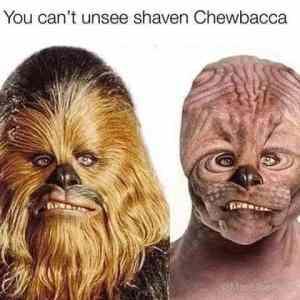Obrázek 'Shaved-not-furred'