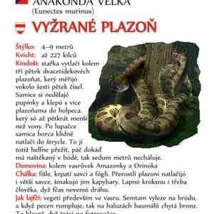Obrázek 'anakonda'