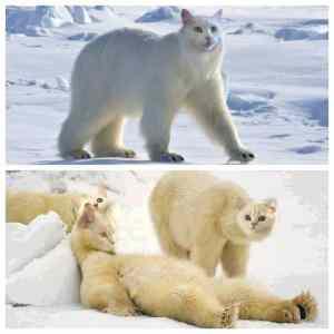 Obrázek 'polarnimacik'