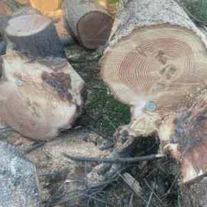 Obrázek 'tigerwood'
