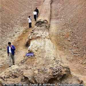 Obrázek 'treefossil'