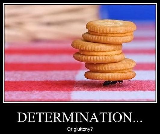 Obrázek -Determination-05.12.2012