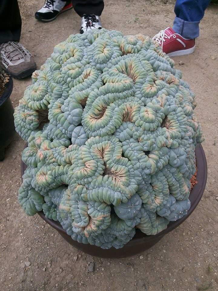 Obrázek -kaktus-
