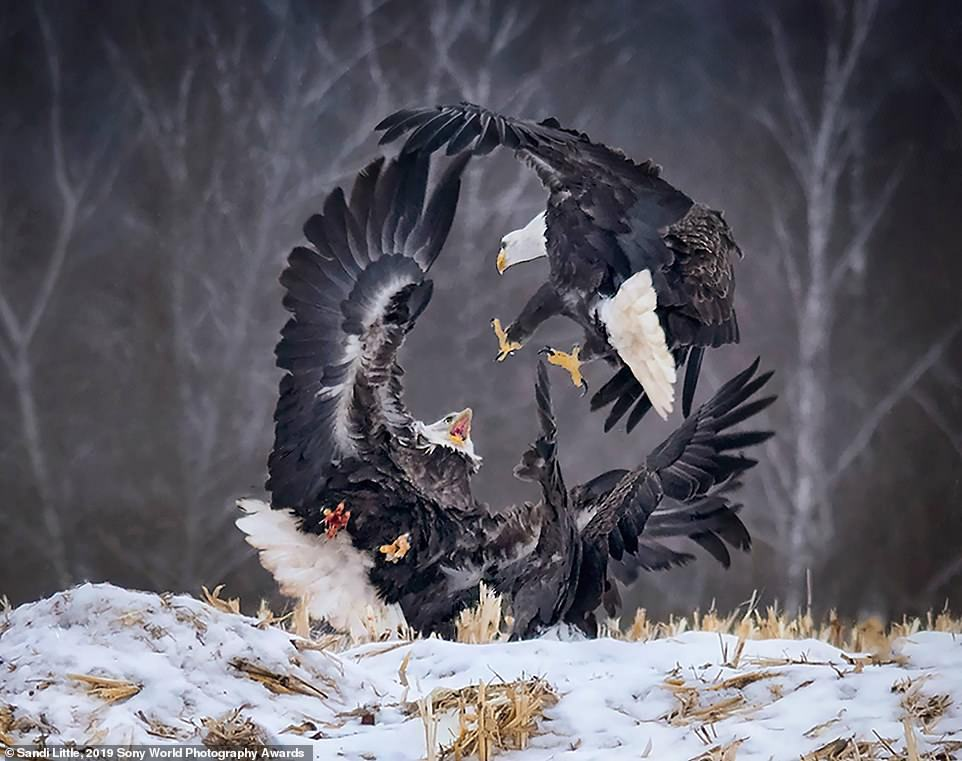 Obrázek 2019 Sony World Photography Awards - Sandi Little