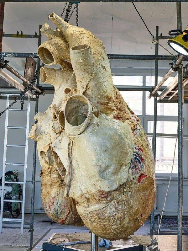 Obrázek A-preserved-Blue-Whales-heart