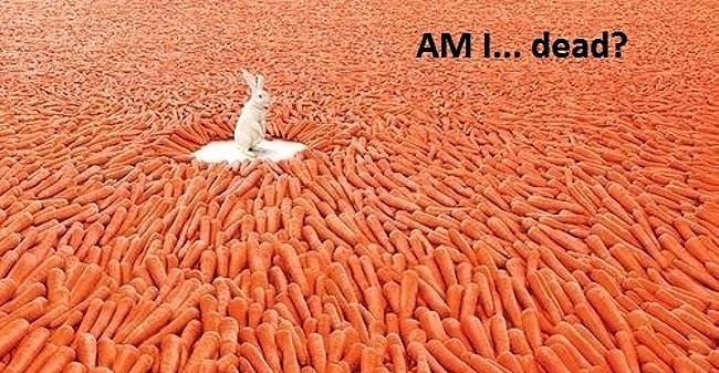 Obrázek AmIdead30-12-2011