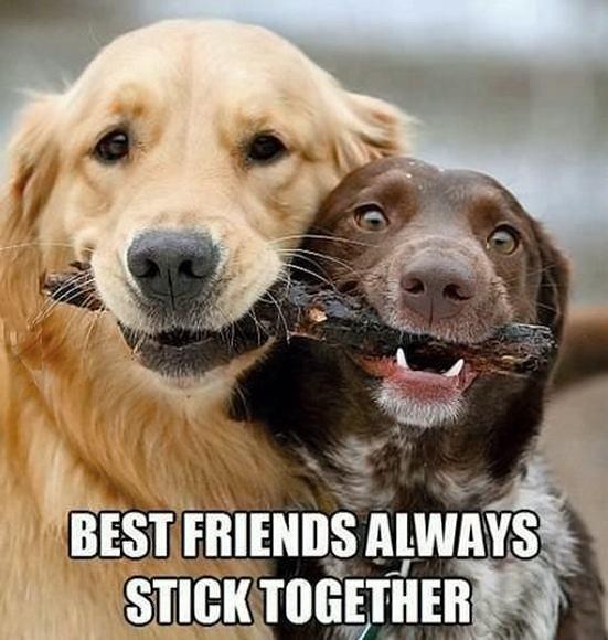 Obrázek BestFriendsAlways