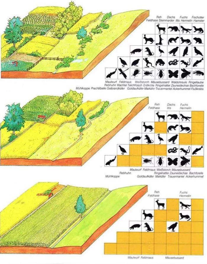 Obrázek Biodiverzita
