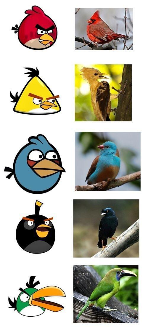 Obrázek Birds270911