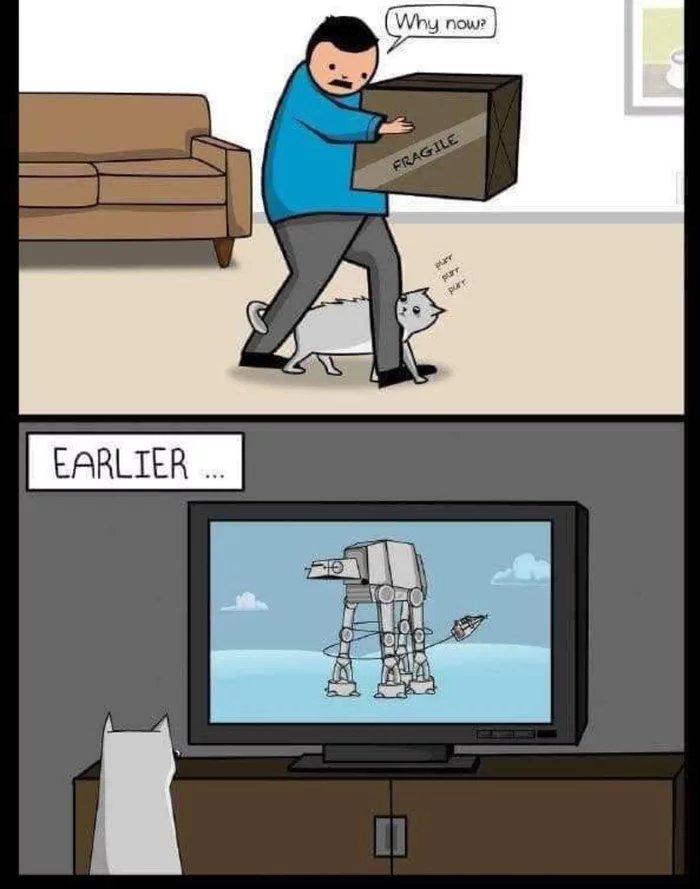 Obrázek Cats-are-assholes
