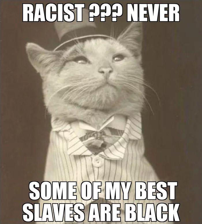 Obrázek Classycatstrikeagain