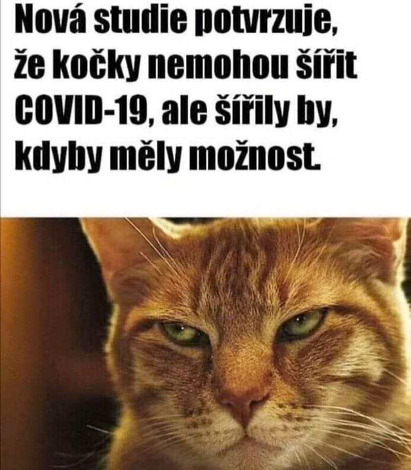 Obrázek Crazypussy