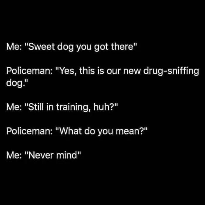 Obrázek Dogintraining