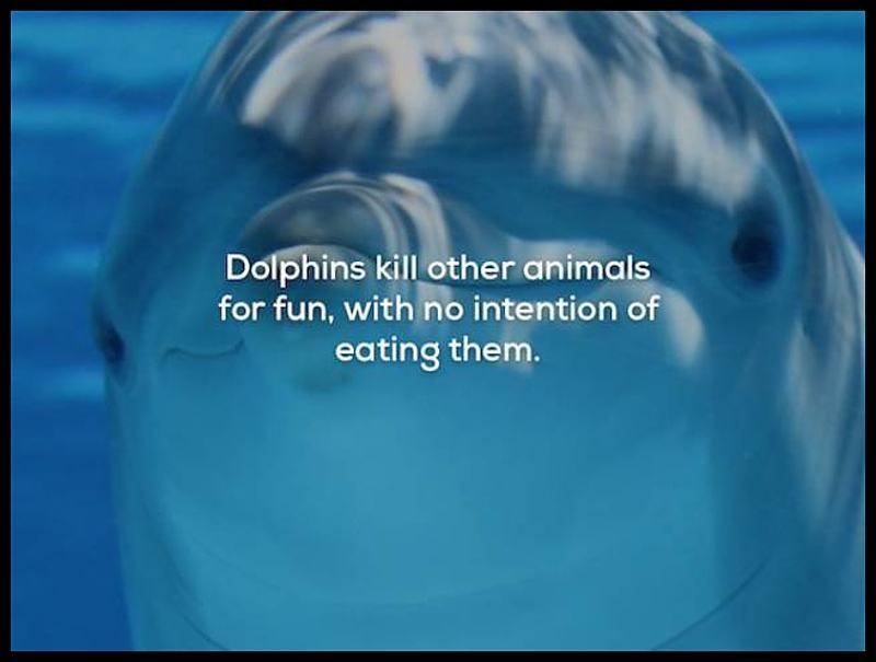 Obrázek DolphinsKill