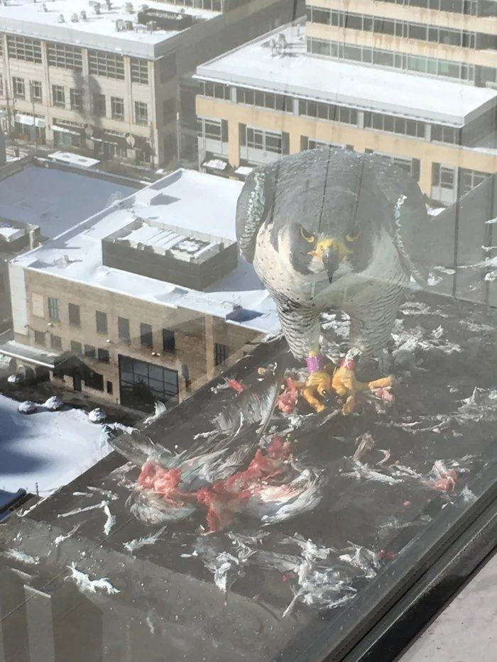 Obrázek Giant-bird-destroys-city