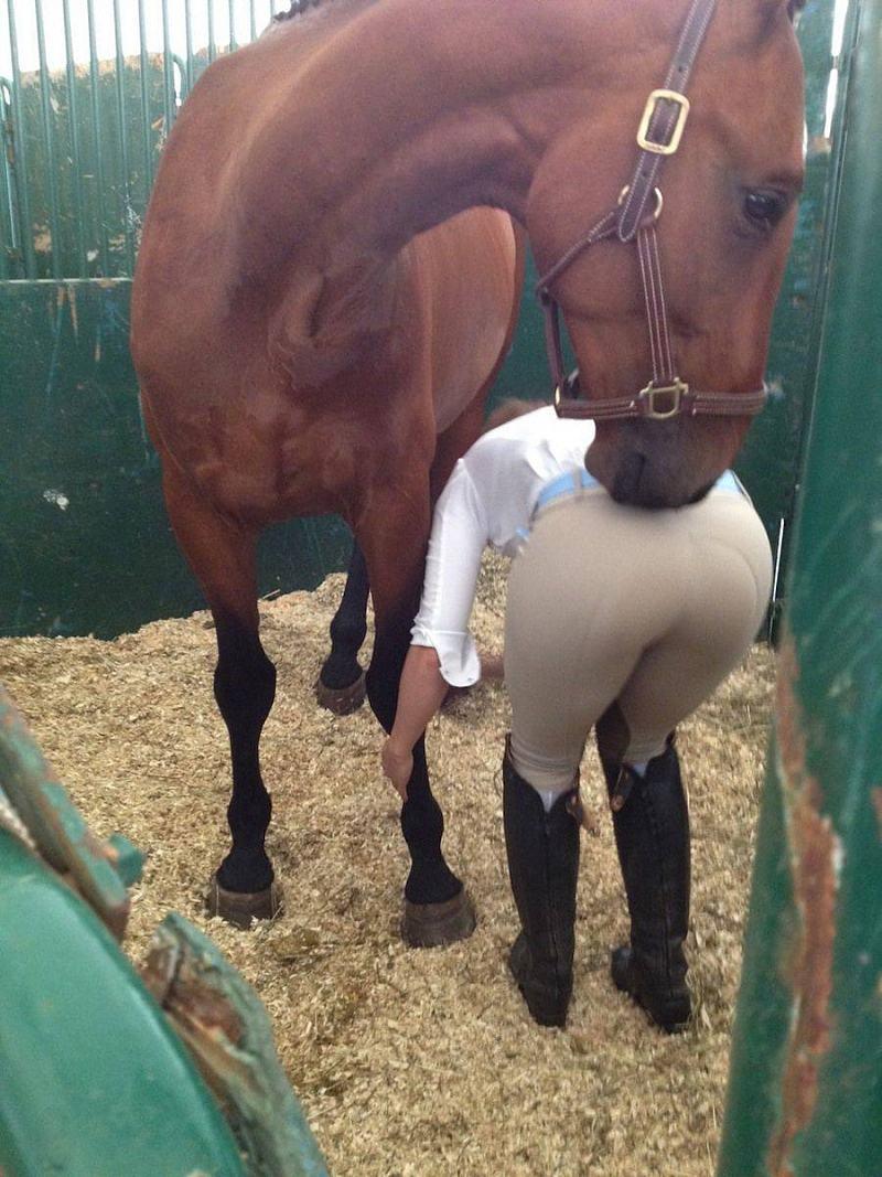 Obrázek Horse-DatASS