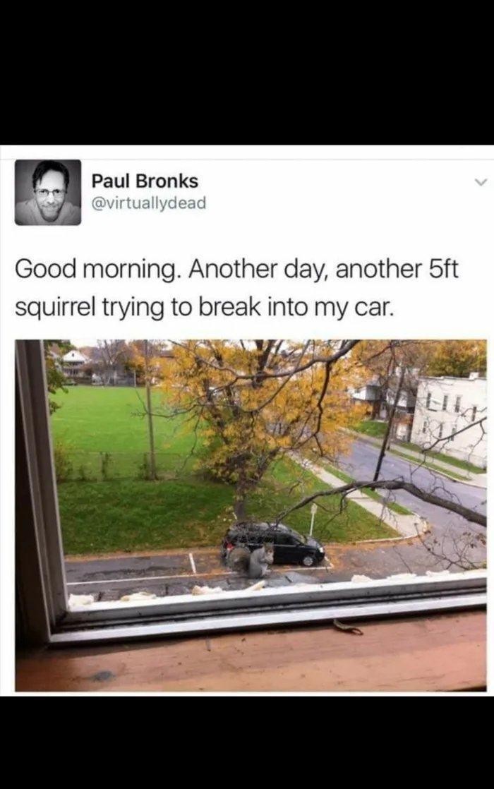 Obrázek Its-good-until-pigeons-arent-that-big