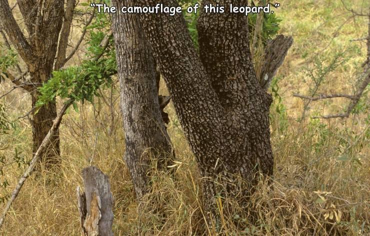 Obrázek LeopardCamouflage