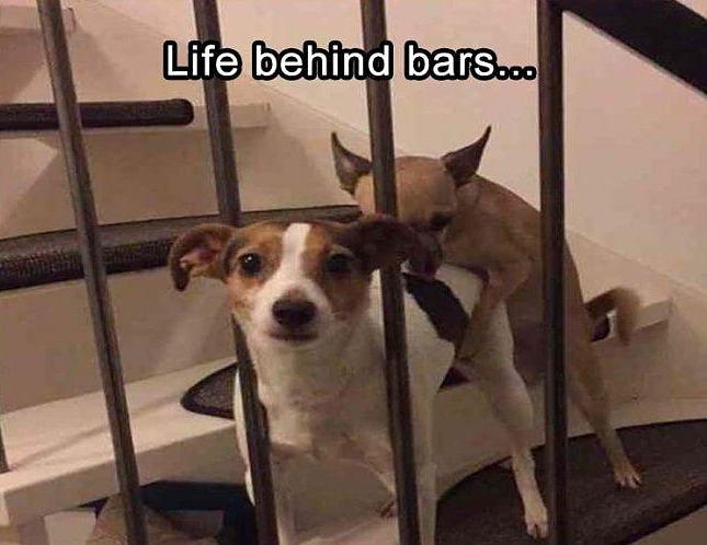Obrázek LifeBehindBARS