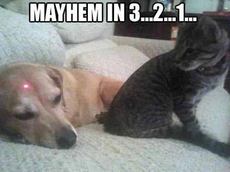 Obrázek Mayhem