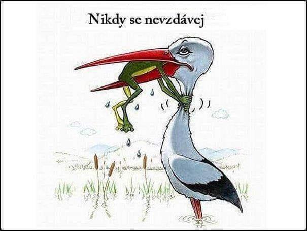 Obrázek NeverGiveUp