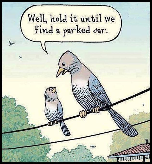 Obrázek ParkedCar