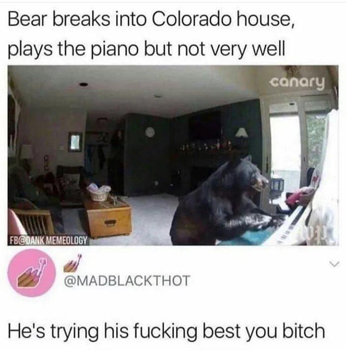 Obrázek Poor-Bear