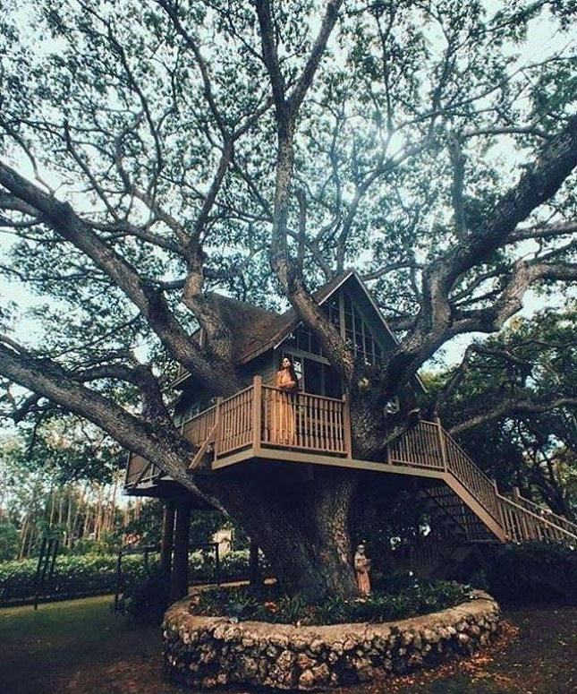 Obrázek Really Awesome TREE House