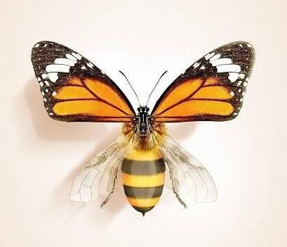 Obrázek RepkomutantVcelo-motyle