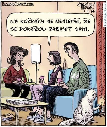 Obrázek Samostatnekocky