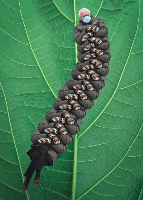 Obrázek Sanderpillar