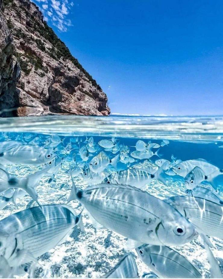 Obrázek SardiniaItaly