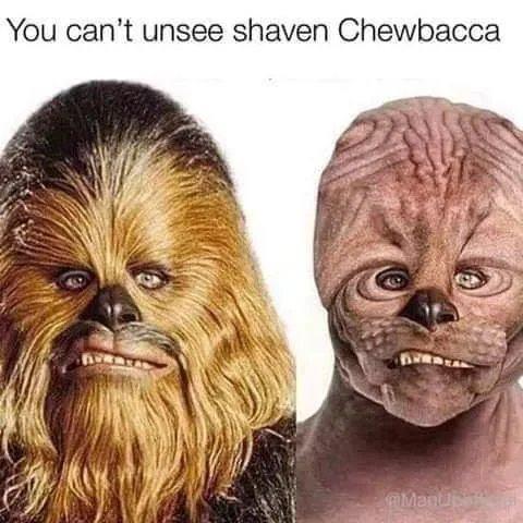 Obrázek Shaved-not-furred