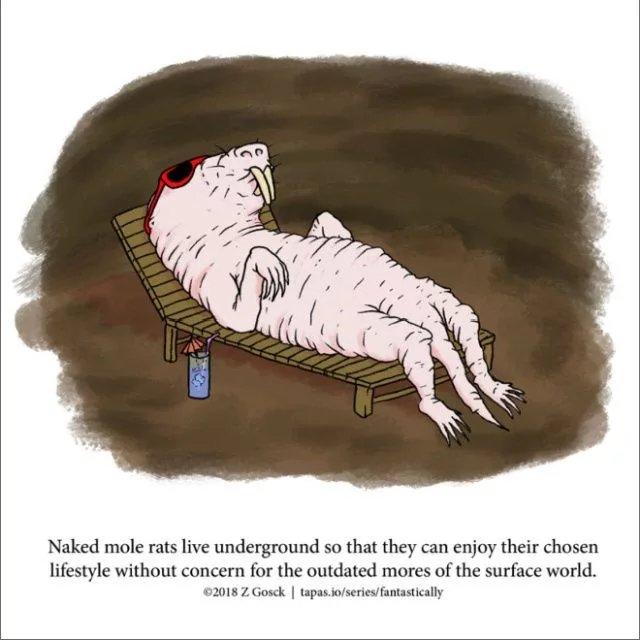 Obrázek The-truth-about-mole-rats