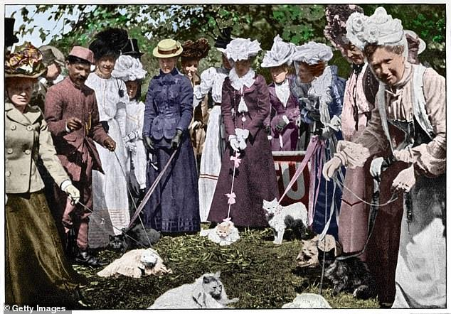 Obrázek The annual cat show at the Royal Botanic Gardens 1900