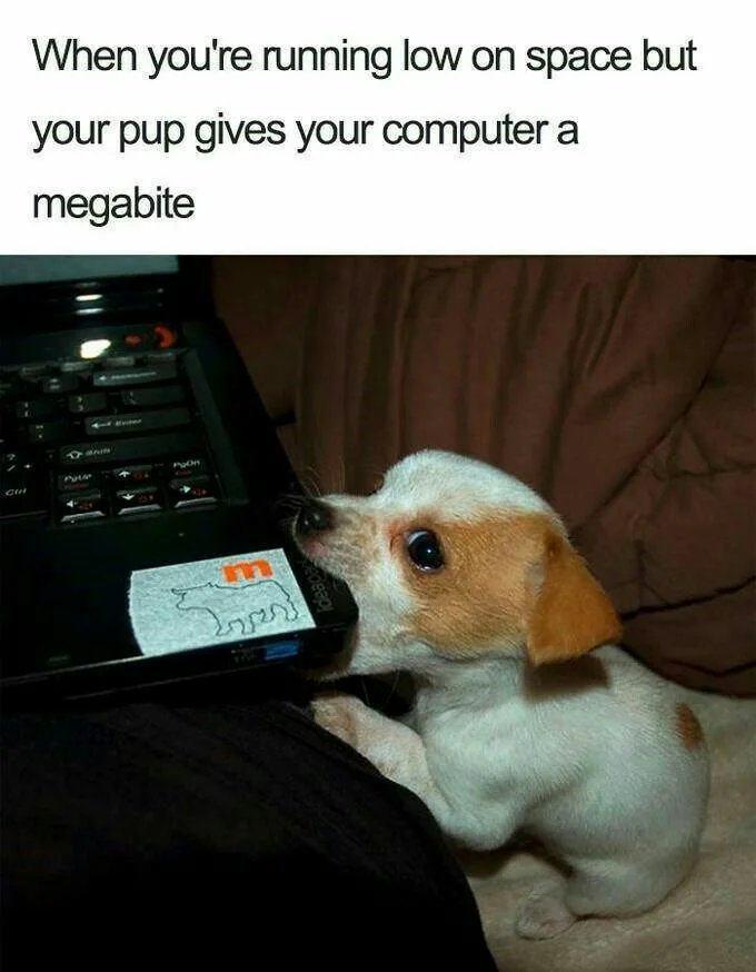 Obrázek Those-puppy-eyes