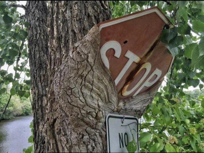 Obrázek Tree-grows-onto-broken-stop-sign