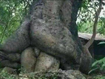 Obrázek Tree-love