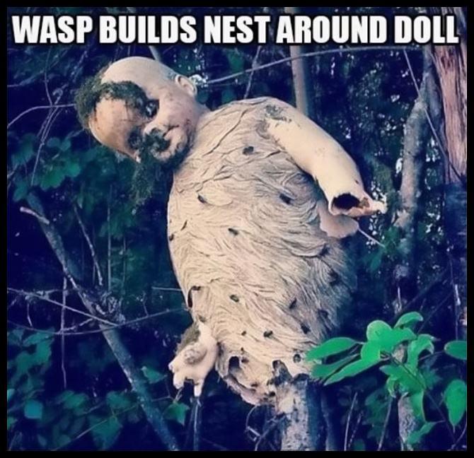 Obrázek WaspsNEST