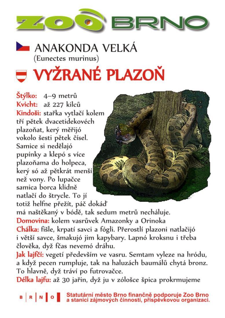 Obrázek anakonda