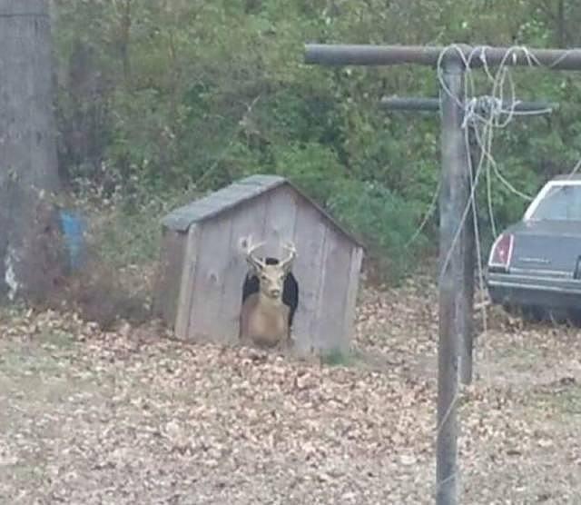 Obrázek animal-houseprotection
