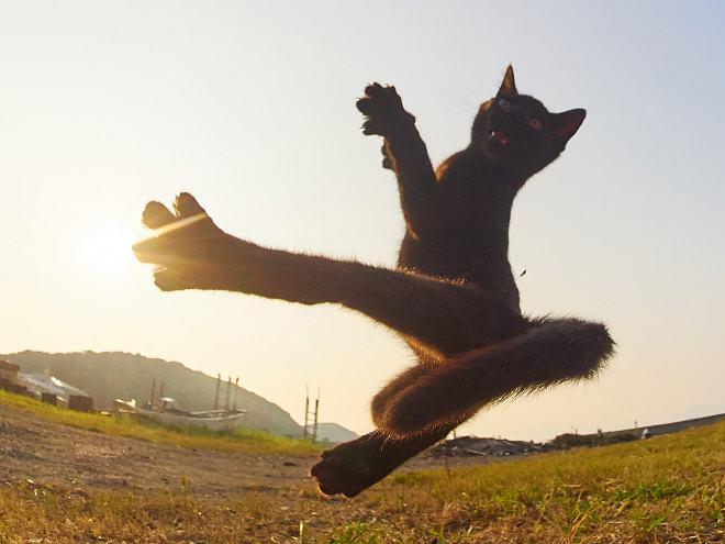 Obrázek catNinjafight