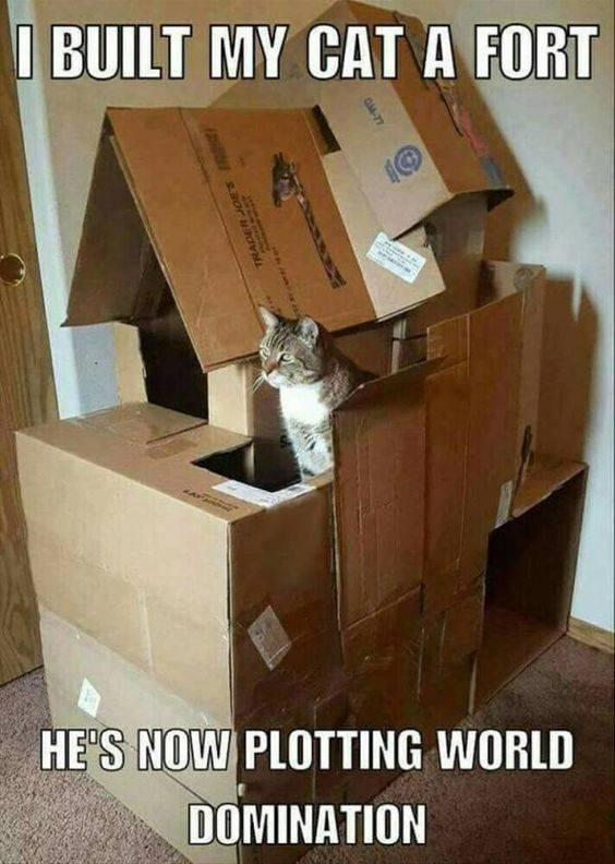 Obrázek catfort