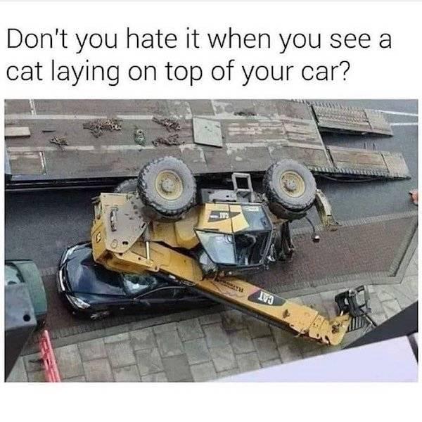 Obrázek catlaying