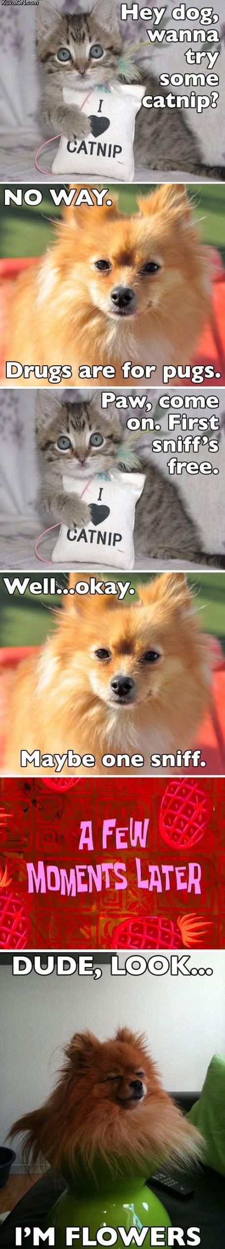 Obrázek catnip