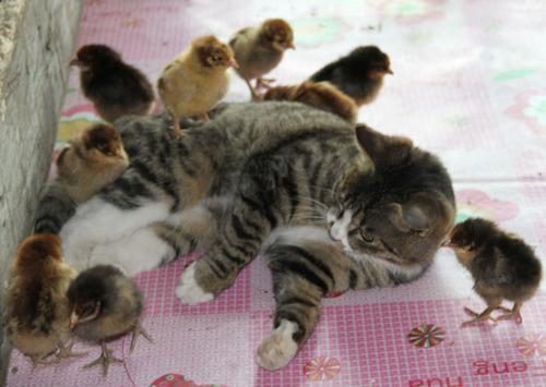 Obrázek chicksshowingtheirpussy