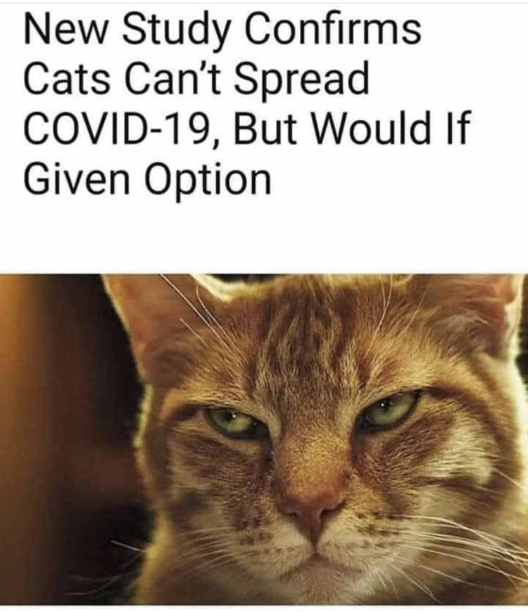 Obrázek covidnews